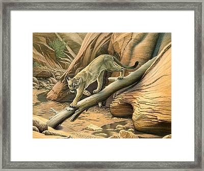 Canyon Hunter -  Cougar Framed Print by Paul Krapf