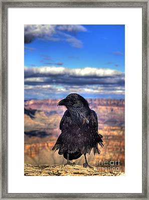 Canyon Raven Framed Print by K D Graves