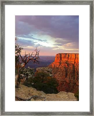 Canyon Rim Tree Framed Print by Heidi Smith