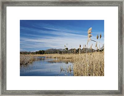 Cape May Marshes Framed Print by Jennifer Lyon