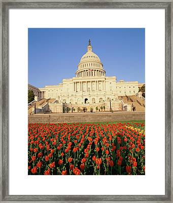 Capitol Building With Bed Of Tulips Framed Print by Panoramic Images