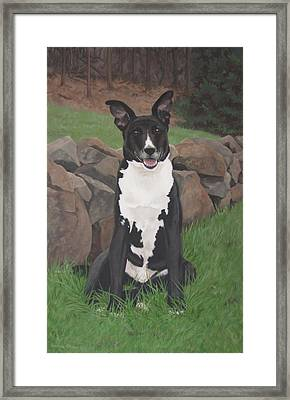 Capone Framed Print by Sandra Chase