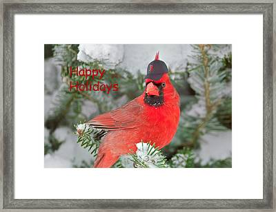 Capped The Cardinals Framed Print by Dale J Martin