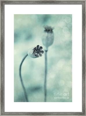 Capsules Series Framed Print by Priska Wettstein
