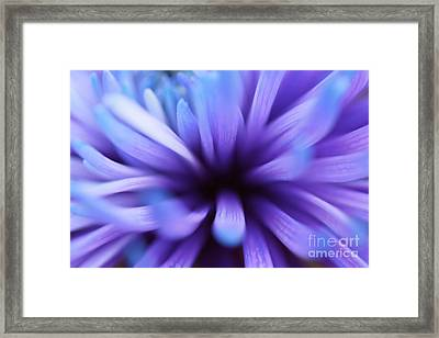 Captivation Framed Print by Inspired Nature Photography Fine Art Photography