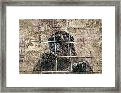 Captivity Framed Print by Tom Mc Nemar