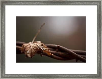 Captured Framed Print by Shane Holsclaw