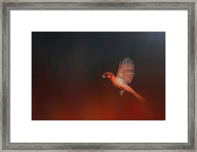 Cardinal 1 - I Wish I Could Fly Series Framed Print by Jai Johnson