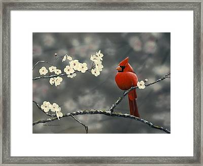 Cardinal And Blossoms Framed Print by Peter Mathios