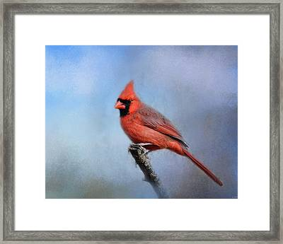 Cardinal At First Frost Framed Print by Jai Johnson