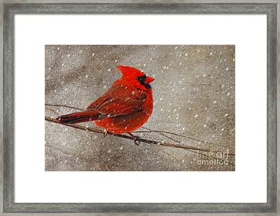 Cardinal In Snow Framed Print by Lois Bryan
