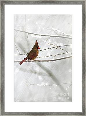 Cardinal In The Rain Framed Print by Tom York Images