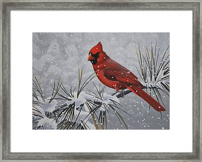 Cardinal In The Snow Framed Print by Peter Mathios