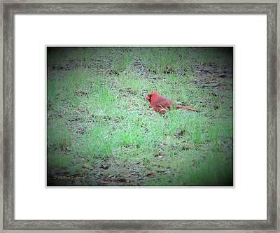 Cardinal On Hunt Framed Print by Sonali Gangane