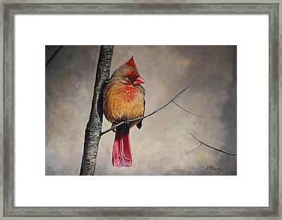 Cardinal Framed Print by Pam Kaur