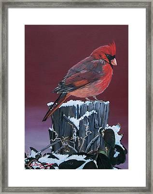 Cardinal Winter Songbird Framed Print by Sharon Duguay