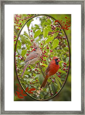 Cardinals In Holly Framed Print by Bonnie Barry