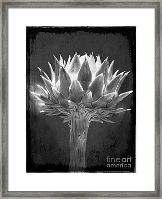 Cardoon Framed Print by Elena Nosyreva