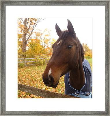 Care Free Country Framed Print by Lingfai Leung
