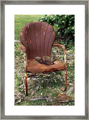 Careful Where You Sit Framed Print by Doug Kreuger