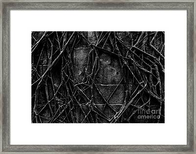 Caress Framed Print by Julian Cook