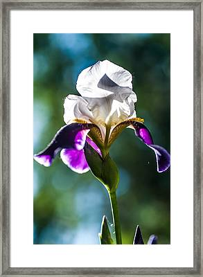 Caressed By Sun. Iris Series Framed Print by Jenny Rainbow