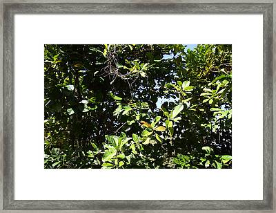 Caribbean Cruise - Dominica - 1212163 Framed Print by DC Photographer