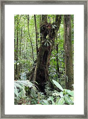 Caribbean Cruise - Dominica - 1212202 Framed Print by DC Photographer