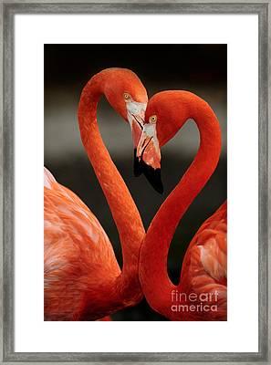 Caribbean Heart Framed Print by Adrian Tavano