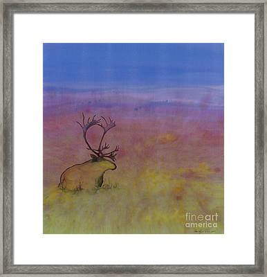 Caribou On The Tundra Framed Print by Carolyn Doe