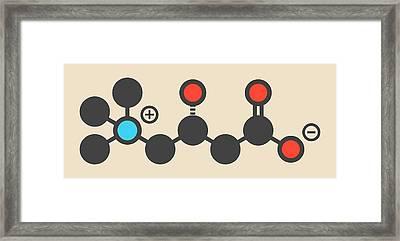 Carnitine Food Supplement Molecule Framed Print by Molekuul