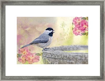 Carolina Chickadee In Camellia Garden Framed Print by Bonnie Barry