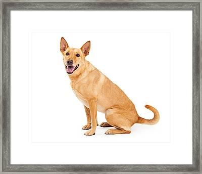 Carolina Dog Sitting Profile Framed Print by Susan  Schmitz
