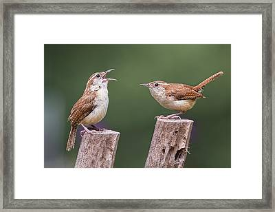 Carolina Wren Serenade Framed Print by Bonnie Barry