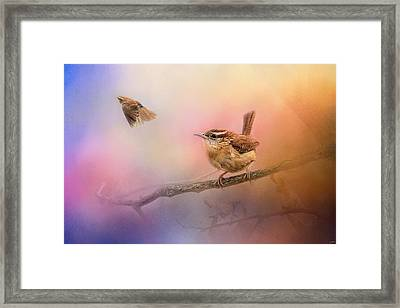 Carolina Wrens Framed Print by Jai Johnson