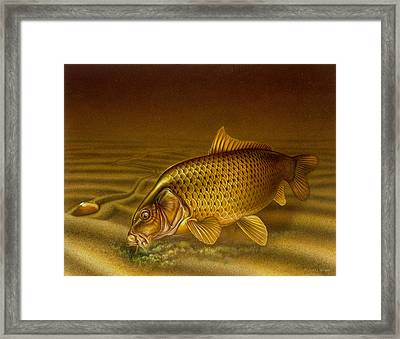 Carp Framed Print by Jon Q Wright