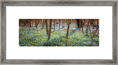 Carpet Of Blue Flowers In Spring Forest Framed Print by Elena Elisseeva