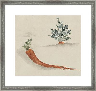 Carrots Framed Print by Aged Pixel