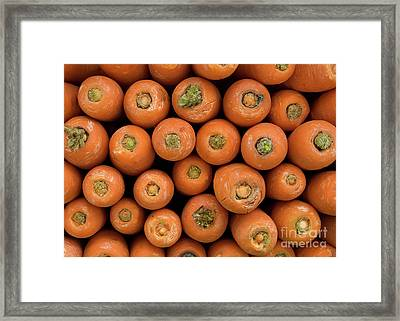 Carrots Framed Print by Rick Piper Photography