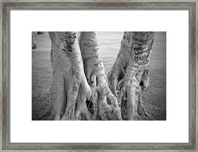 Carved Roots Framed Print by Chris Ann Wiggins