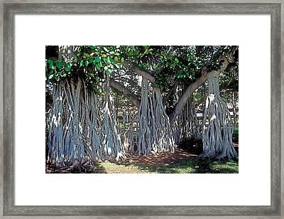 Cascade Framed Print by Terry Reynoldson