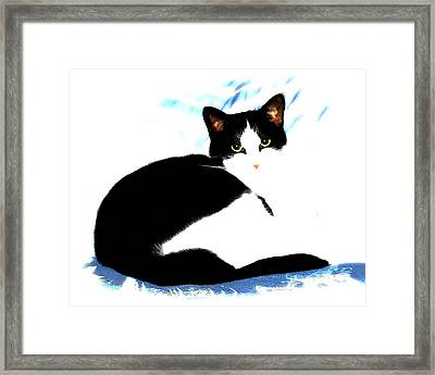 Casey Framed Print by Dale   Ford