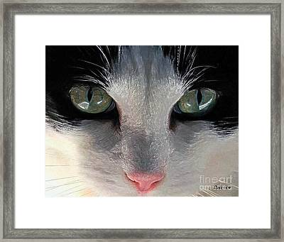 Casey Eyes Framed Print by Dale   Ford