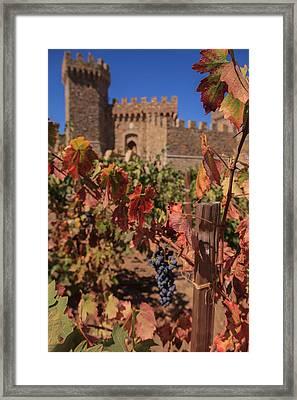 Harvest Castelle Di Amorosa Framed Print by Scott Campbell