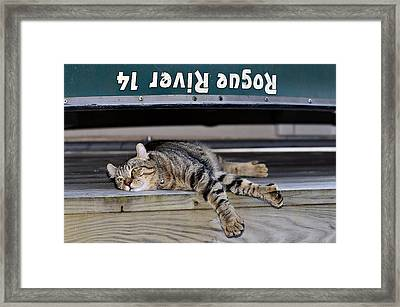Cat And A Canoe Framed Print by Susan Leggett