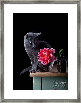 Cat And Tulip Framed Print by Nailia Schwarz