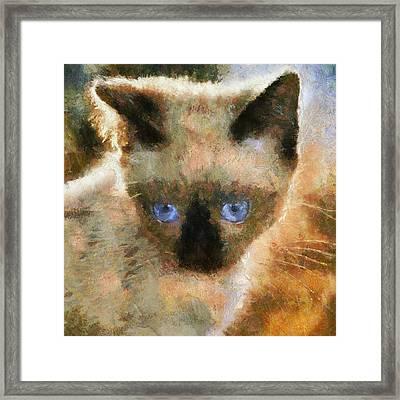 Cat Blue Eyes Framed Print by Yury Malkov