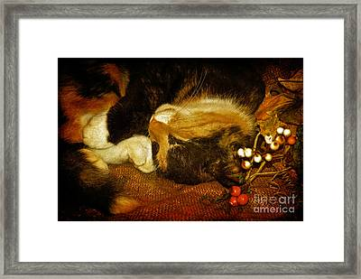 Cat Catnapping Framed Print by Lois Bryan