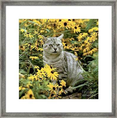 Cat In Flowers Framed Print by Hans Reinhard/Okapia