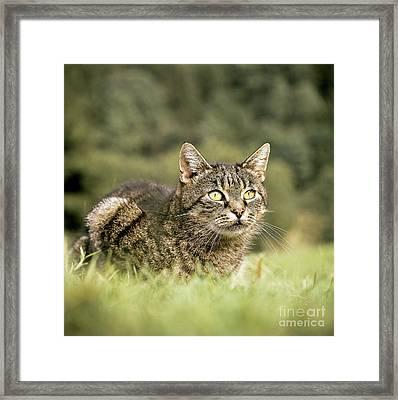 Cat In Grass Framed Print by Hans Reinhard/Okapia
